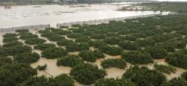 Ribera, martedì incontro operativo urgente sui danni da esondazioni e piogge eccessive.