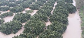 La furia delle acque devasta l'agricoltura, segnalazione dei danni presso la CIA