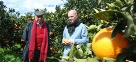 Nino Cufalo su Rai1 Mattina parla delle peculiarità dell'Arancia di Ribera e delle difficoltà del fare agricoltura oggi
