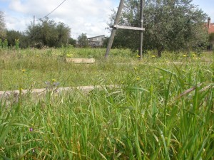 Viale sommerso da erba all'interno del Parco degli Ulivi